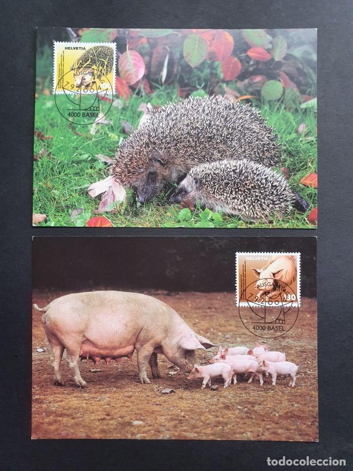 2 TARJETAS MÁXIMA SUIZA 2004: FAUNA CERDOS Y ERIZOS (Sellos - Extranjero - Tarjetas Máximas)