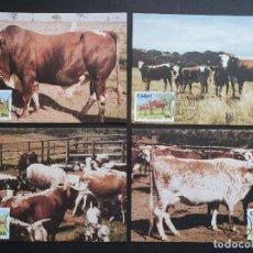 Sellos: 4 TARJETAS MÁXIMA CISKEI 1987: NKONE RAZA DE GANADO - COW (VACA) - BULL (TORO). Lote 226117695