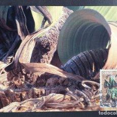"""Timbres: TARJETA MÁXIMA NAMIBIA - FLORA PLANTA PREHISTÓRICA: """"WELWITSCHIA MIRABILIS"""" CERCA, KHORIXAS 2000. Lote 245065390"""