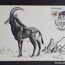 Sellos: TARJETA MÁXIMA BOPHUTHATSWANA - ANTÍLOPE SABLE (HIPPOTRAGUS NIGER), PHOKENG 1983. Lote 245392410