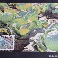 Sellos: TARJETA MÁXIMA BOPHUTHATSWANA - FLORA CULTIVOS: COLES, TAUNG 1988. Lote 245410080