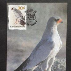 Sellos: TARJETA MÁXIMA BOPHUTHATSWANA - FAUNA AVES: AZOR LAGARTIJERO (MELIERRAX CANORUS), SAULSPOORT 1989. Lote 245410505