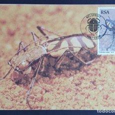 Sellos: TARJETA MÁXIMA SUDAFRICA - FAUNA INSECTOS: ESCARABAJO TIGRE (CHAETODERA REGALIS), NELSPRUIT 1987. Lote 245924540