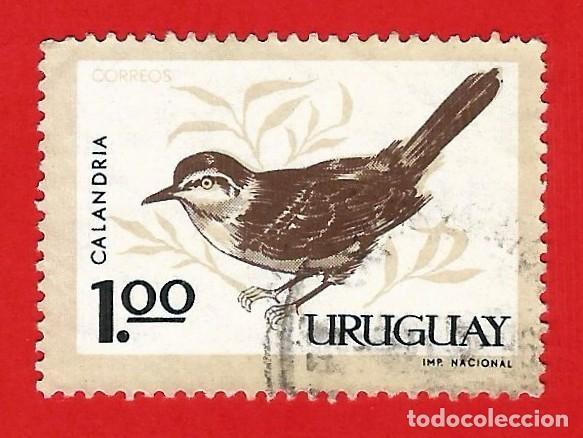 URUGUAY. 1963. PAJAROS. CALANDRA (Sellos - Extranjero - América - Uruguay)