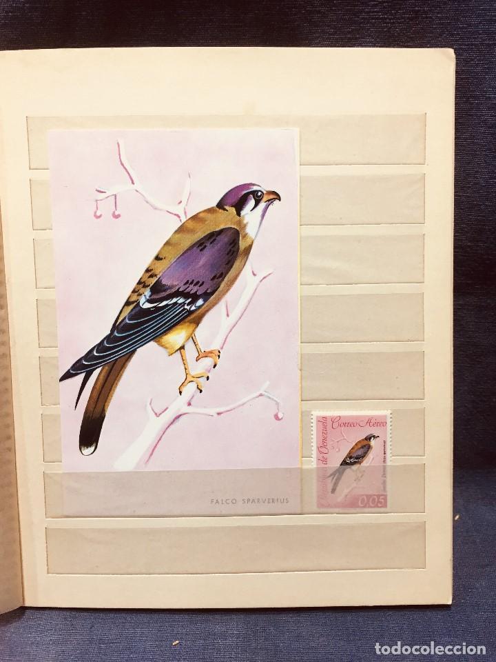 Sellos: colección serie sellos venezuela tarjetas postales aves mediados s xx - Foto 17 - 184549486