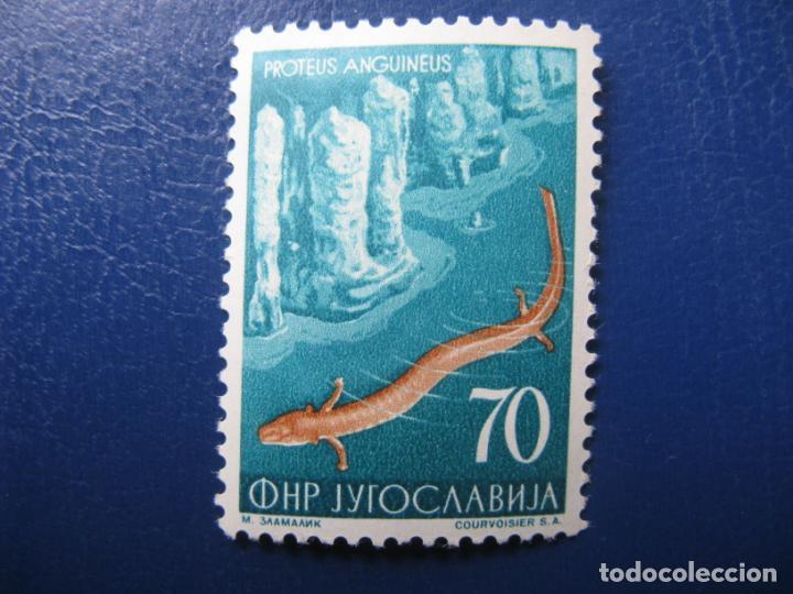 YUGOSLAVIA 1954, PROTEUS ANGUINEUS, YVERT 653 (Sellos - Extranjero - Europa - Yugoslavia)