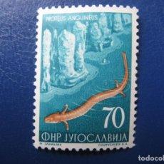 Sellos: YUGOSLAVIA 1954, PROTEUS ANGUINEUS, YVERT 653. Lote 201544037