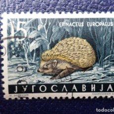 Sellos: -YUGOSLAVIA, 1960, FAUNA, ERIZO, YVERT 818. Lote 289665168