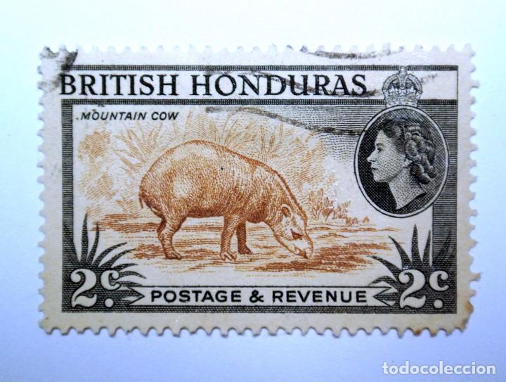 SELLO POSTAL BRITISH HONDURAS 1953 , 2 C ,TAPIR AMERICA CENTRAL, USADO (Sellos - Extranjero - América - Otros paises)