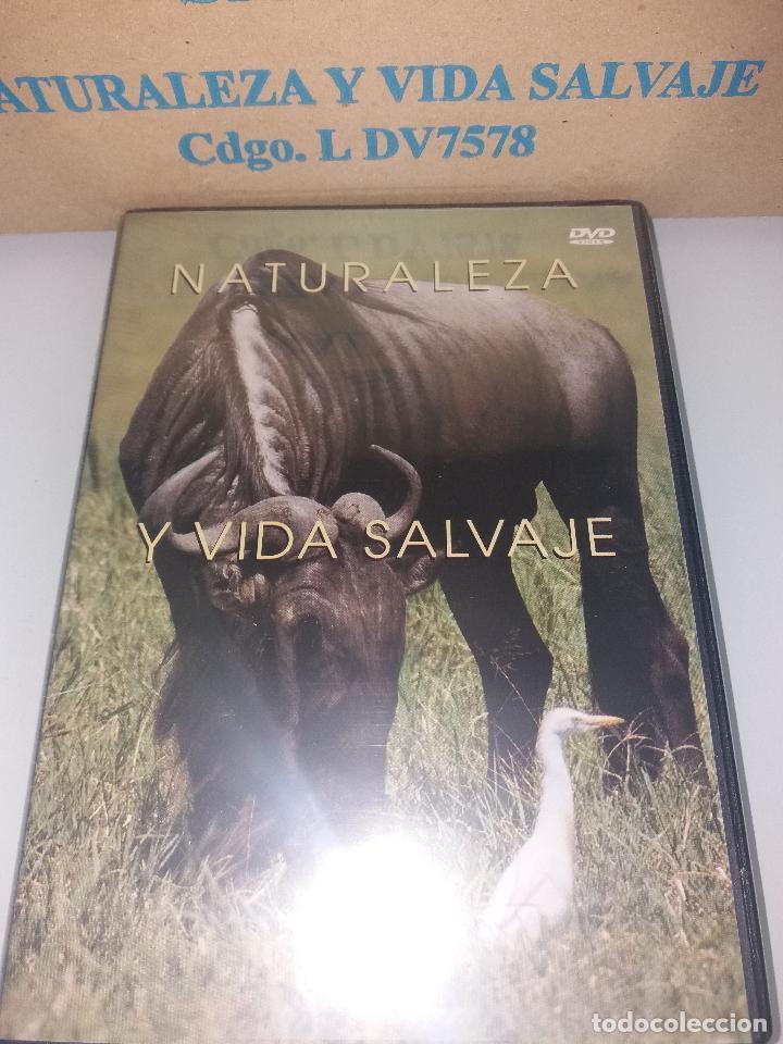Series de TV: dvd naturaleza y vida salvaje - Foto 7 - 83731456