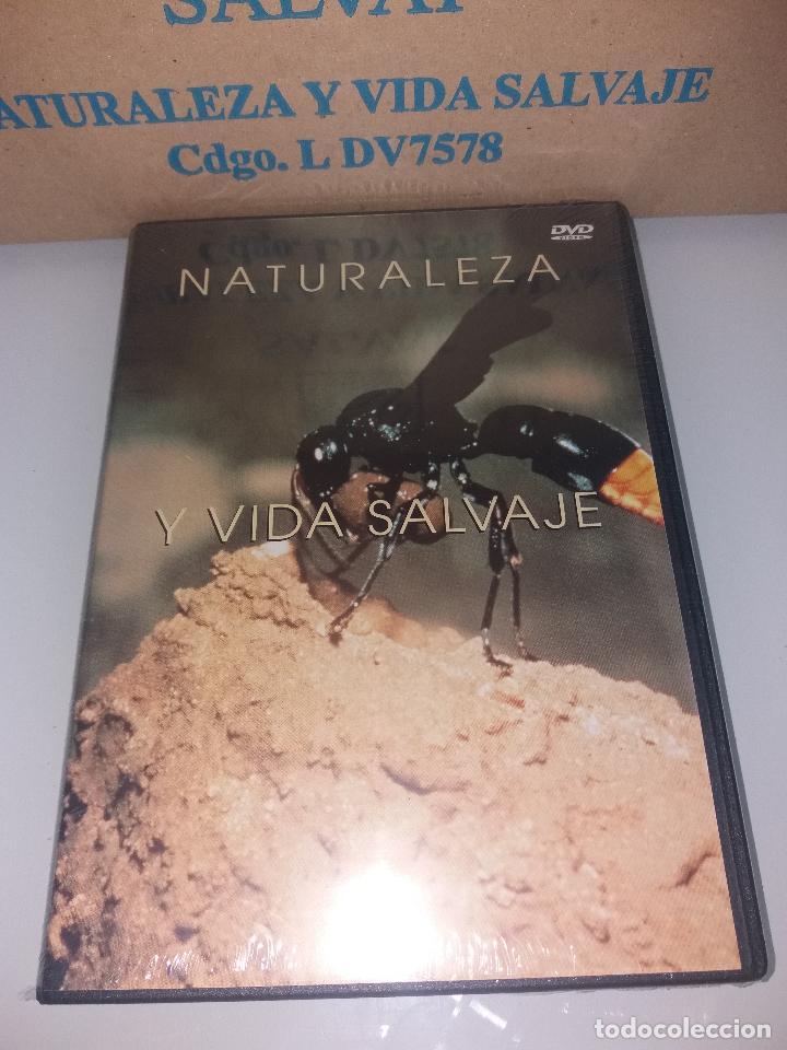 Series de TV: dvd naturaleza y vida salvaje - Foto 8 - 83731456