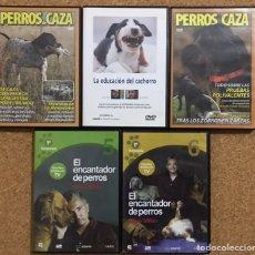 Series de TV: LOTE 5 DVD ENCANTADOR DE PERROS - CAZA EDUCACION CACHORRO CANINA - CESAR MILLAN - RAZA MUNDO TV. Lote 237021730