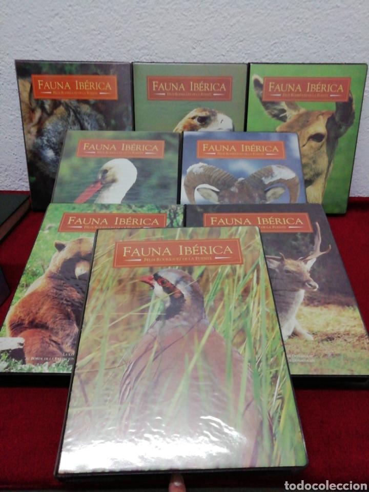 Series de TV: Fauna ibérica Félix Rodríguez de la Fuente. Colección Salvat VHS. Ocho estuches con dos VHS cada uno - Foto 2 - 162211646