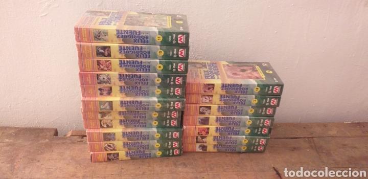 COLECCION COMPLETA EL HOMBRE Y LA TIERRA FAUNA IBÉRICA (Series TV en VHS )