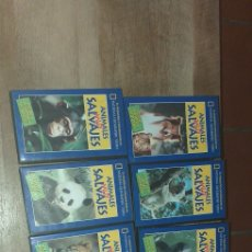 Series de TV: 9 VHS DE ANIMALES MUY SALVAJES DE NATIONAL GEOGHAPHIC. Lote 198226937