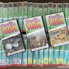 Series de TV: DESAFÍOS DE LA VIDA. SERIE DOCUMENTAL DIRIGIDA POR DAVID ATTENBOROUGH, COLECCIÓN COMPLETA 37 VHS. Lote 199519577