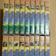 Series de TV: LOTE DEL HOMBRE Y LA TIERRA ,VHS, FÉLIX RODRÍGUEZ DE LA FUENTE. Lote 203197387