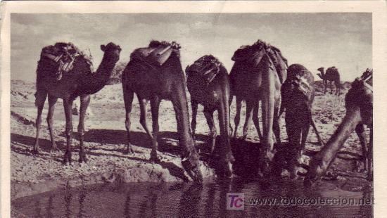 Sellos: MARRUECOS ESPAÑOL: TARJETA COMERCIAL CAMELLOS CIRCULADA 1953 DE LARACHE A FRANCIA. - Foto 2 - 23492658