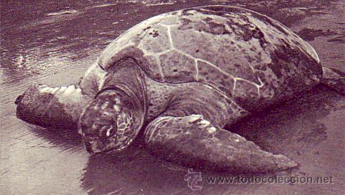 Sellos: FERNANDO POO: FRANCO TRICOLOR EN TARJETA COMERCIAL CIRCULADA 1953 DE SANTA ISABEL A SUIZA. - Foto 2 - 22752561