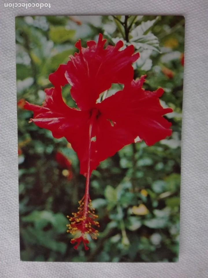 Sellos: 910 POSTAL - MALAYSIAN AIRLINE SYSTEM - FLOR HIBISCUS - FRANQUEO MECANICO 1976 SELANGOR - Foto 2 - 191004225
