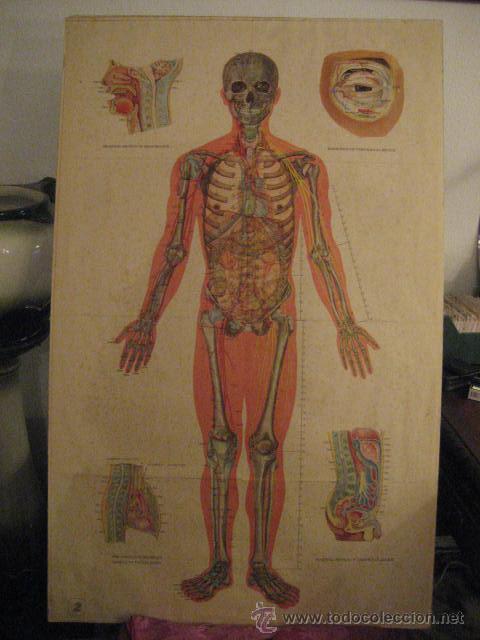 gran lamina antigua de acupuntura - anatomia - - Comprar en ...