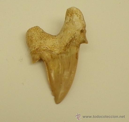 Coleccionismo de fósiles: - Foto 2 - 32456633
