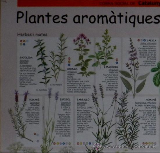 Plantes arom tiques i remeieres dels paisos cat comprar for Plantes aromatiques