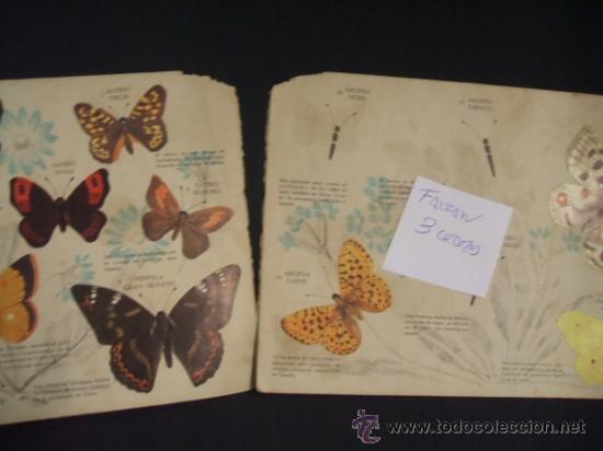 Coleccionismo Álbumes: - Foto 2 - 37999011