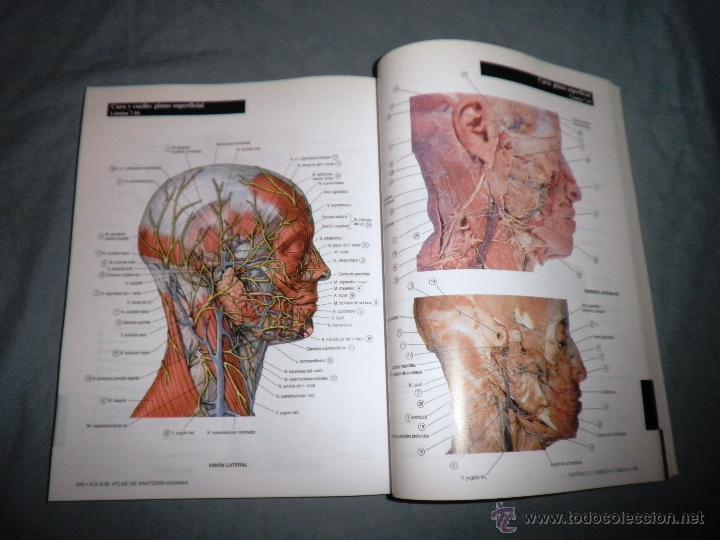 Hermosa Imágenes Anatomía Adam Adorno - Anatomía de Las Imágenesdel ...