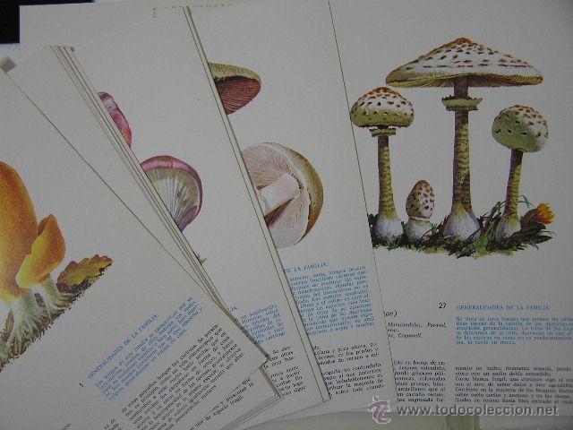 Libros de segunda mano: - Foto 3 - 40967085