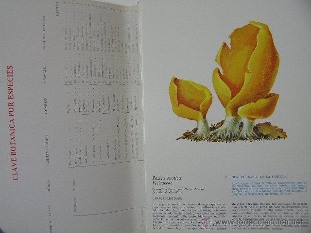 Libros de segunda mano: - Foto 4 - 40967085