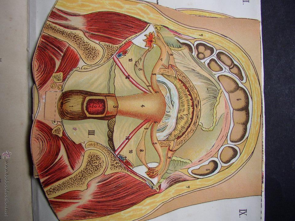 pop up anatomia , cuerpo humano , organos sexua - Comprar Libros ...