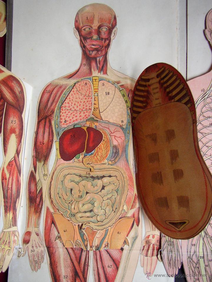 Excepcional Anatomía Femenina Ano Motivo - Anatomía de Las ...
