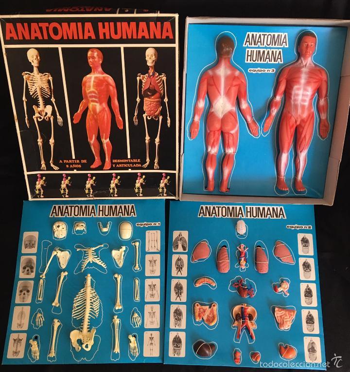 Dorable Anatomía Y Fisiología Juegos De Etiquetado Colección de ...