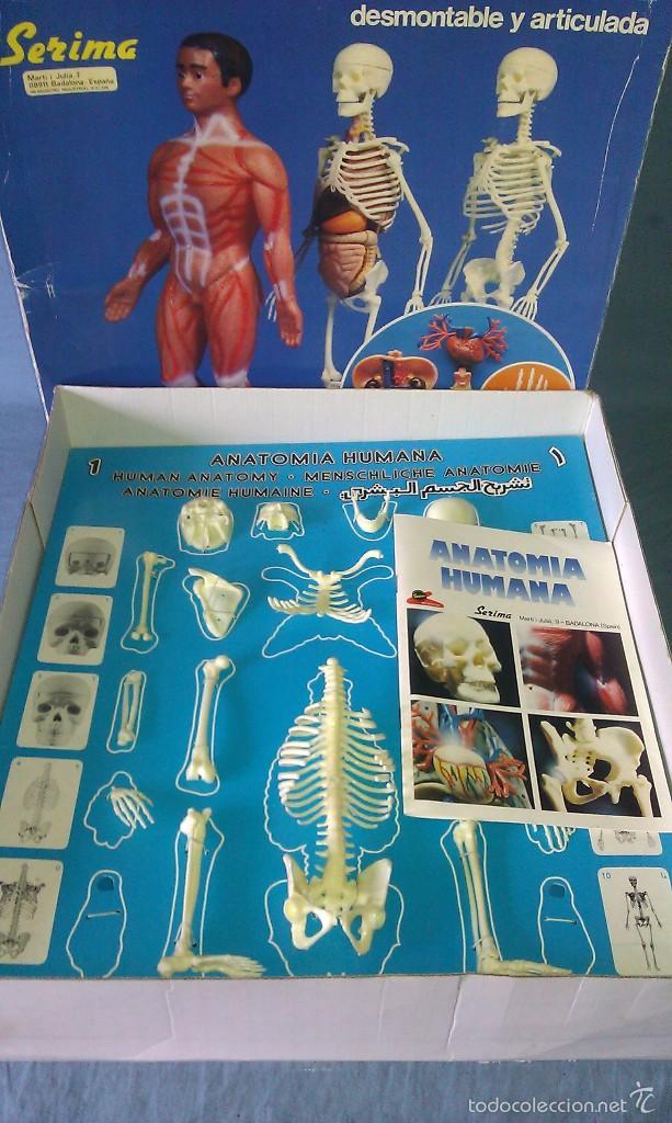 antiguo juego anatomía humana de serima complet - Comprar Juegos ...