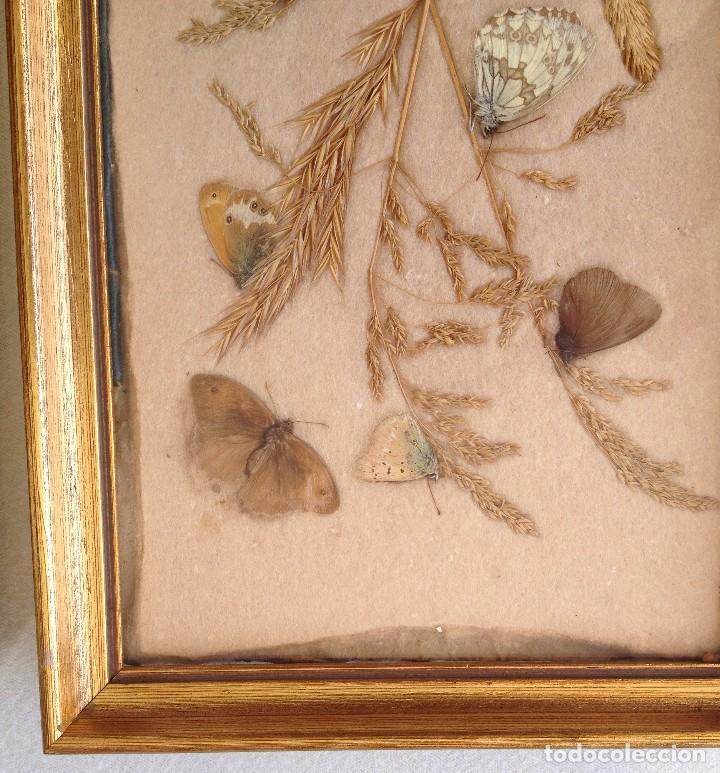 2 cuadros hechos a mano con mariposas y trigo. - Comprar Marcos ...