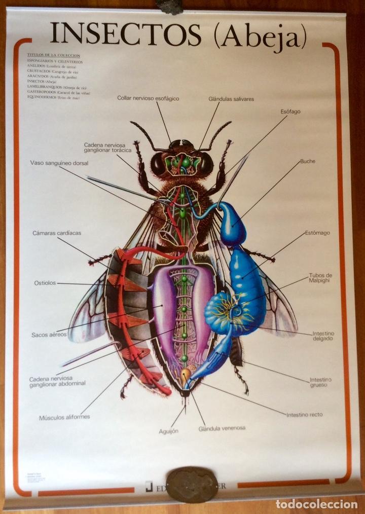 lote 8 murales de anatomía animal. ediciones jo - Comprar en ...