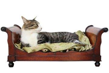 Cama de gato antigua
