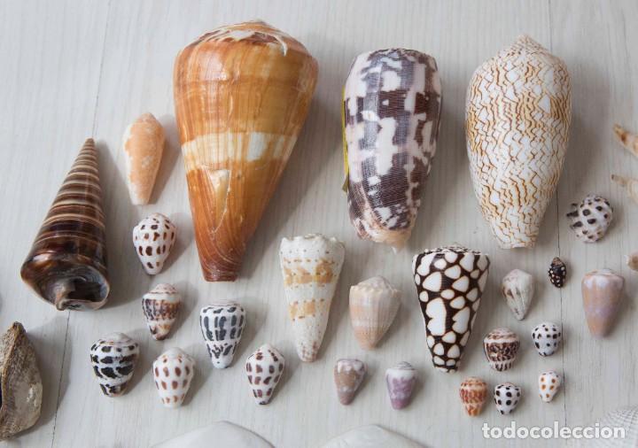 Conchas de Malacología