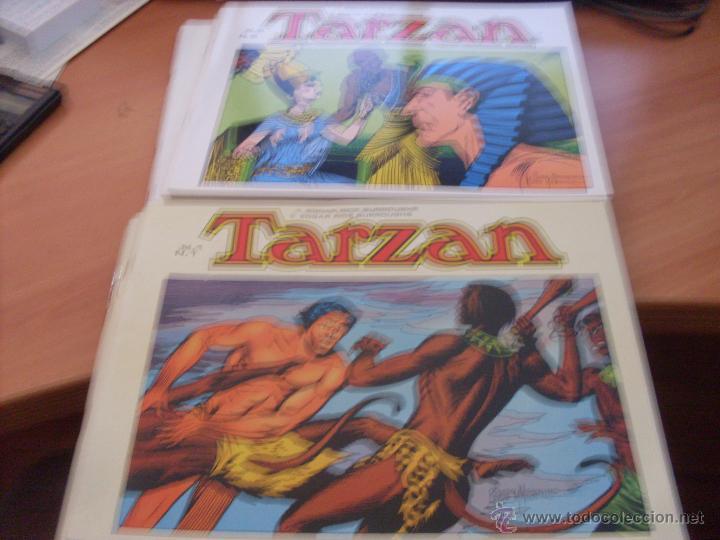 TARZAN LOTE COLECCION COMPLETA . EDGAR RICE BURROUGHS (ED. B.O.) (CLA6) (Tebeos y Comics - Tebeos Colecciones y Lotes Avanzados)