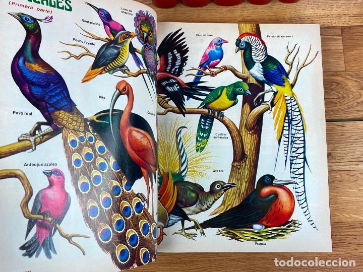 Tebeos: Coleccion petete desde el numero 1 al 169 - Incluye coleccionable - Foto 3 - 196814338