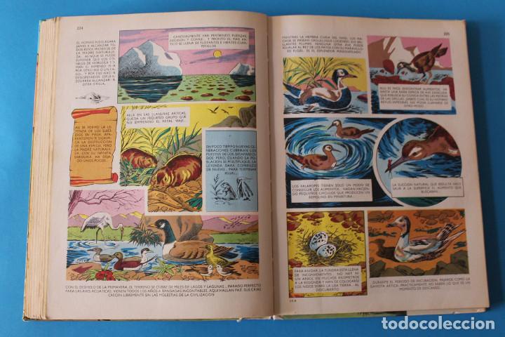 Tebeos: Películas Walt Disney - Nº8 - Colección Jovial - Octavo Tomo - Foto 4 - 195344063
