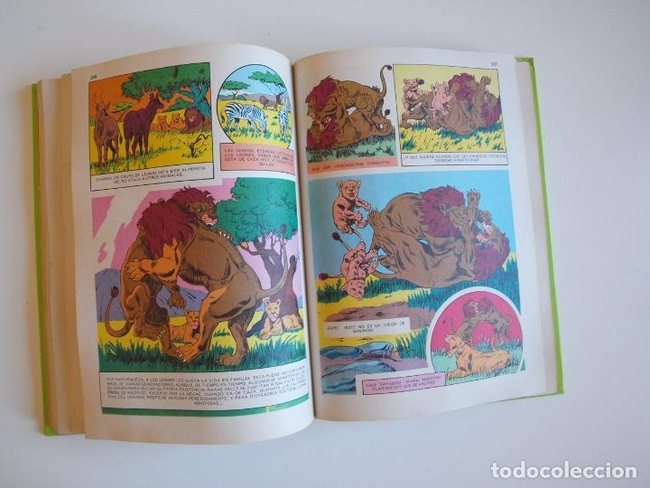 Tebeos: PELÍCULAS WALT DISNEY - TOMO 18 - COLECCIÓN JOVIAL - EDICIONES RECREATIVAS E.R.S.A. 1982 - Foto 8 - 205511447