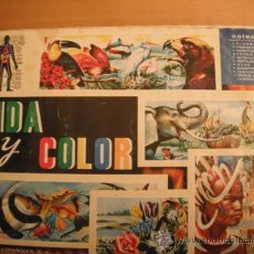 Tebeos: ALBUM MAGA. VIDA Y COLOR.1965.. Lote 33773510