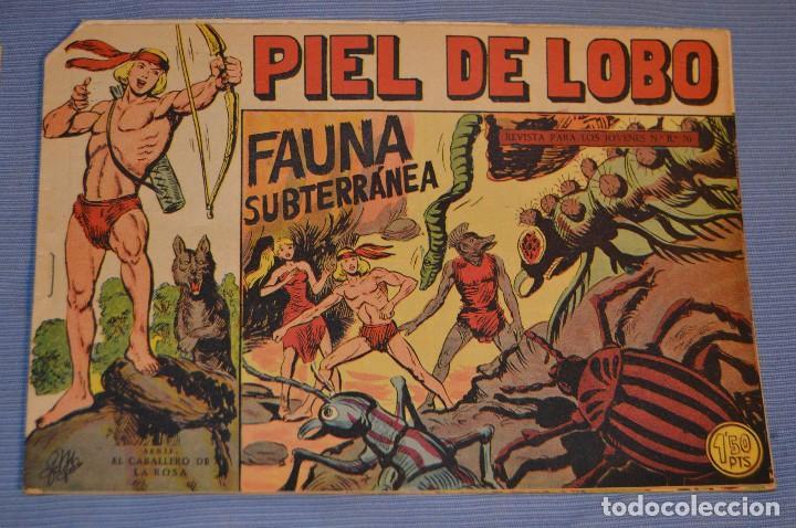 PIEL DE LOBO - EDITORIAL MAGA - NÚM. 24 - ORIGINAL, BUEN ESTADO - AÑOS 50/60 ¡MIRA FOTOS/DETALLES! (Tebeos y Comics - Maga - Piel de Lobo)