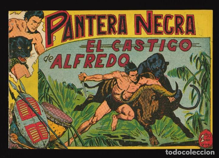 PANTERA NEGRA - MAGA / NÚMERO 24 (Tebeos y Comics - Maga - Pantera Negra)