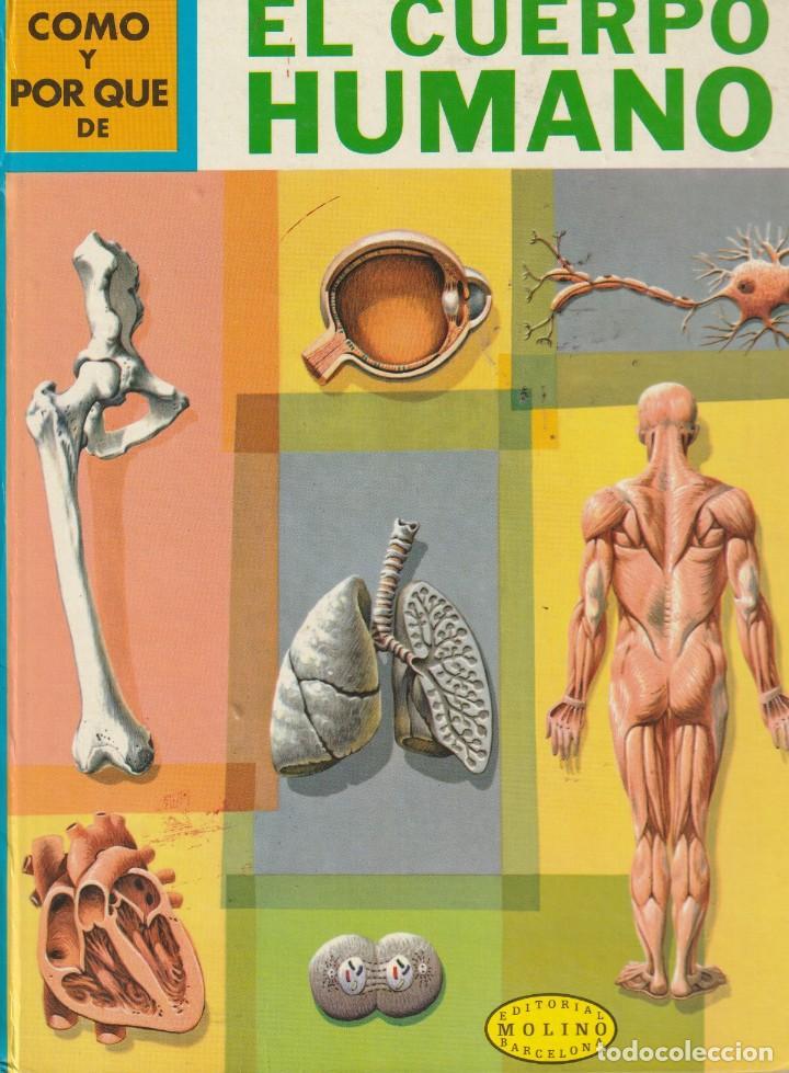 COMO Y POR QUE DE EL CUERPO HUMANO.3.MARTIN KEEN.ED.MOLINO.1968 (Tebeos y Comics - Molino)