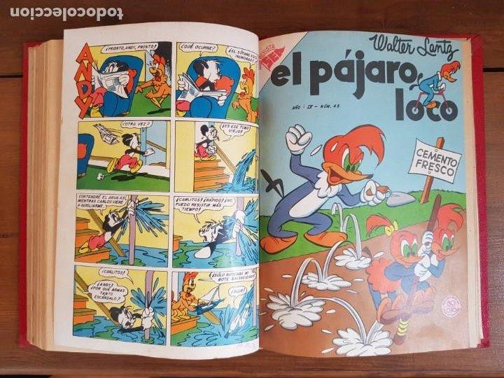 Tebeos: LOTE 11 TEBEOS/CÓMIC TOMO ORIGINAL PORKY EL PÁJARO LOCO CONEJO DE LA SUERTE NOVARO SEA 1953 - Foto 13 - 219526487