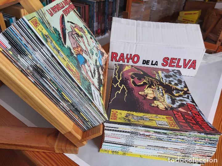 Tebeos: * RAYO DE LA SELVA * COMPLETA 83 NUMEROS * REEDICION EN CAJA * - Foto 2 - 254015830
