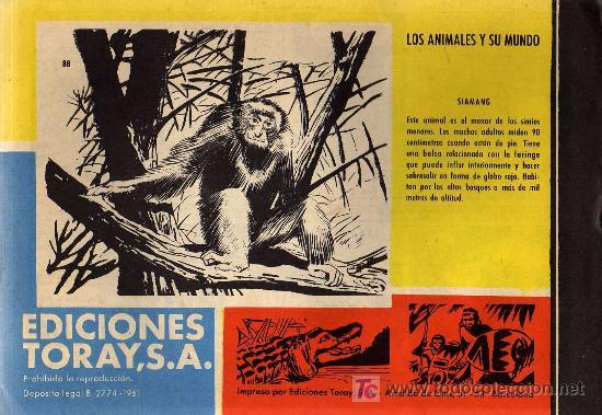 Tebeos: TAMAR - Nº 88 - BORRELL/ACEDO - EDICIONES TORAY 1961 - ORIGINAL, NO FACSIMIL - Foto 2 - 11313409